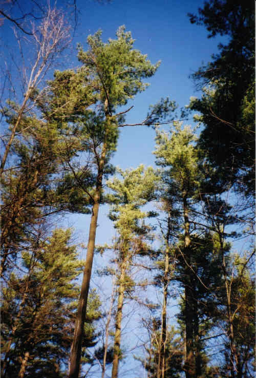 photo of trees